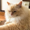 catblog1-2m